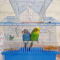 Попугаи, в Набережных Челнах