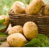 Картофель, в Ижевске