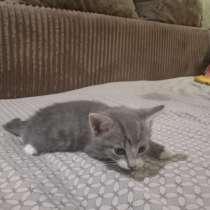 Котенок(мальчик), в Чите