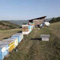 Продажа мёда, в г.Баку