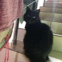 Кошечка Кира, в Краснодаре