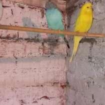 Аквариумные рыбки и декоративные животные, в Кургане