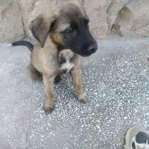Продаётся щенок дворняга, в г.Навои