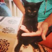 Черный котенок Северус, в Санкт-Петербурге