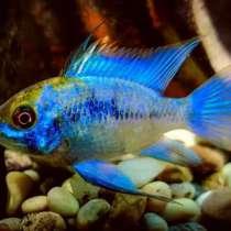 Разные рыбки 15 видов, в Махачкале