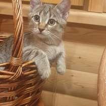Кошечка в добрые руки), в Гатчине