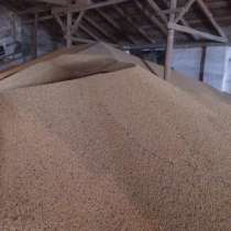 Ячмень, пшеница, семена подсолнечника, в г.Павлодар