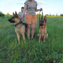 Собаки, в г.Орша