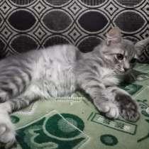 Отдам котяток в добрые руки, в Краснодаре