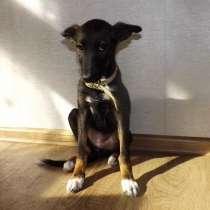 Ласковый щенок, в Ангарске