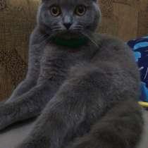 Продам красивых котят, в г.Запорожье