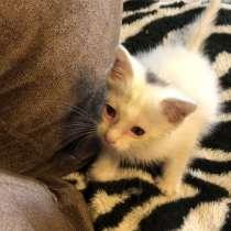 В хорошие ответственные руки отдаём маленькую кошечку!, в Владивостоке