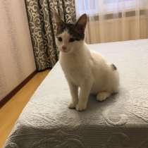Отдам котёнка в добрые руки, в Санкт-Петербурге