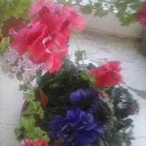 Комнатные цветы, в Лабытнанги