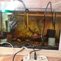 Аквариум с рыбками, в Краснодаре