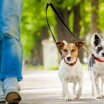 Выгуливаю собак в Саянске, в Саянске