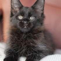 Продается кошка-батошка Мейн- кун, в Екатеринбурге