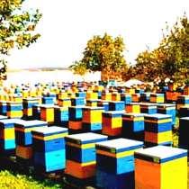 Мёд оптом, в Перми
