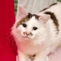 Замечательный во всех отношениях кот Степан ищет семью и дом, в Москве