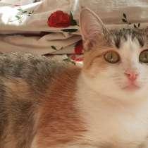 Замечательная молодая кошечка, в Чебоксарах