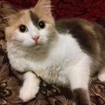 Кошечка Бусинка 1,5 года, в Невинномысске