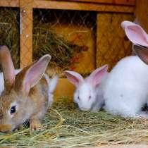 Продадим крольчат, в Санкт-Петербурге