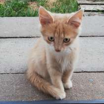 Котёнок ищет дом, в г.Могилёв
