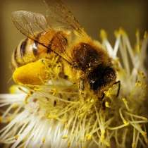 Пчелы и пчелиные домики, фляги, медогонка, в Шуе