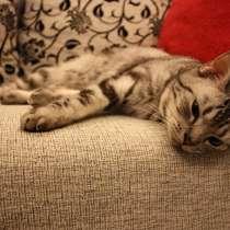 Передержка кошек, в Тюмени