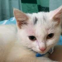 Заберите котенка в добрые руки ❤️, в Хабаровске