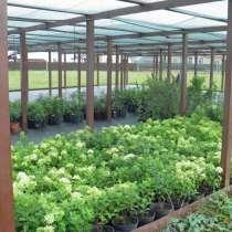 Купить растения оптом, в Москве