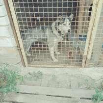 Передержка животных, в Саратове