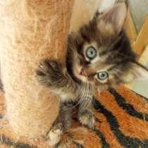 Котята в дар очень милые, в Владимире