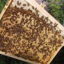 Пчеломатки Бакфаст в72 в60 в4 в366 в21, в г.Кривой Рог