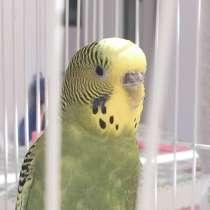 Попугай, в Кургане