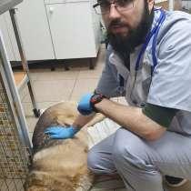 """Ветеринарная клиника """"Доктор Пух"""", в Голицыне"""