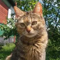 Прелестная кошечка ищет хороший дом!, в г.Пинск