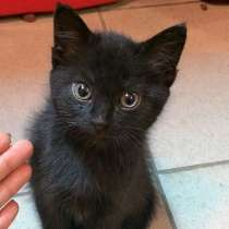 Котёнок, в г.Минск