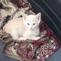 Котята в добрые руки, в г.Ашхабад