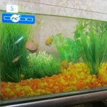 Продам аквариум с рыбками и улитками в комплекте, в Набережных Челнах