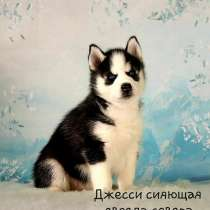 Продаются щеночки хаски, в Москве