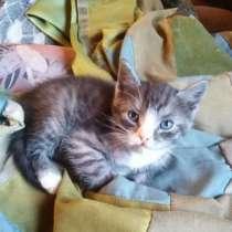 Отдам котят в добрые руки, в Егорьевске