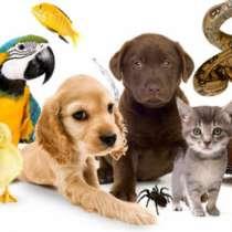 Передержка любых животных, в Ростове-на-Дону