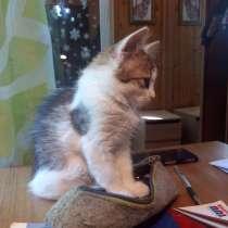 Трехцветный котик, в Сестрорецке