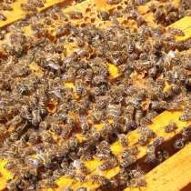 Приму в дар пчёл, в Ногинске