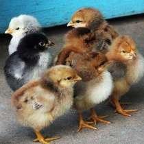 Комбикорм для бройлеров 1-3 недели и молодняка птицы ПК-5, в Железнодорожном