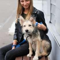 Оригинальный и трогательный пушистик-щенок, в Санкт-Петербурге