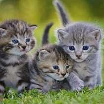 Приму котят в добрые руки, в Благовещенске