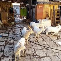 Продам коз, в Сухом Логе