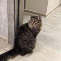 Отдам кошку, в Новосибирске